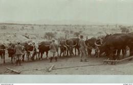 1912    Deutsch-Südwestafrika, DSWA Original Foto A K Namibia - Namibia