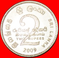 § LION: SRI LANKA ★ 2 RUPEES 2009 MINT LUSTER! LOW START★NO RESERVE! - Sri Lanka