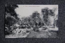 TAZA - Jardin Du Cercle Militaire - Maroc