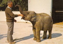 50 - Zoo De  LESSAY - KALI, L Eléphant Vedette De Cinéma - Frankreich