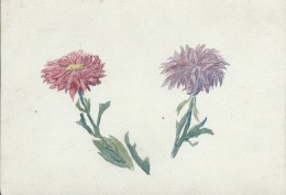 Dessin D´amateur/Aquarelle/L RACLET/Non Encadré/Fleurs/ Reines-Marguerite /Vers 1930    GRAV169 - Watercolours