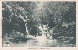 GUADELOUPE/Cascade En Forêt / Réf:C4577 - Guadeloupe