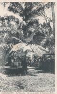 GUADELOUPE/ Le Matouba Un Coin Du Jardin De L'habitation Rollin/ Réf:C4578 - Guadeloupe