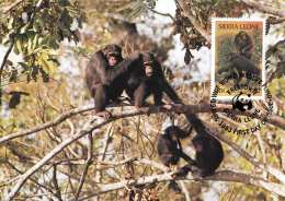 SIERRA LEONE - 10 C Sondermarke Auf Maximumkarte Schimpanse WWF - Sierra Leone