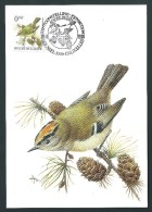 Oiseaux Buzin. Roitelet Huppé. 1991. - 1985-.. Oiseaux (Buzin)