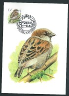 Oiseaux Buzin.  1994.  Carte Maximum. Moineau Domestique. 2533. - 1985-.. Oiseaux (Buzin)