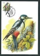 Oiseaux Buzin. Pic épeiche. 3162. Oblit. Petit - Rechain. - 1985-.. Oiseaux (Buzin)
