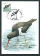 Oiseaux Buzin. Huitrier Pie. 3087. Oblit. 8500 Kortrijk 2002. - 1985-.. Oiseaux (Buzin)