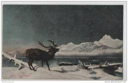 Magnificent Stag On A Cold Snowy Winters Night (Unknown Artist) Deer - Art Card - Unclassified