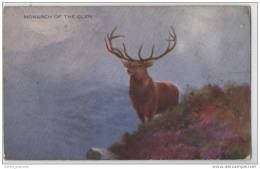 Monarch Of The Glen - Magnificent Stag On The Scottish Highlands (Unknown Artist) Deer - Art Card - Unclassified