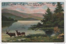 Deer Grazing On The Shores Of Loch Lomand, Scotland - Art Card - Unclassified