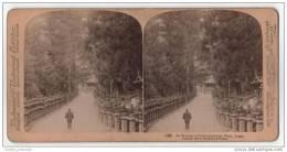 StereoScope - An Avenue Of Stone Lanterns, Nara, Japan - Stereoscope Cards