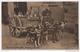 Belgium - Laitière Flamande - Flemish Milk Maid - With 5 Dogs - Trade