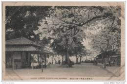 Japan - Cherry Blossoms - Suwa Park, Nagasaki - Other