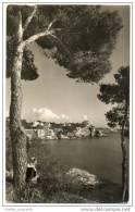 Spain - Panorama - Calamayor Palma De Mallorca - Local Lady By A Tree - Real Photo - Mallorca
