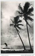 Ceylon (Sri Lanka) - Sunset & Palms By The Sea Shore - Sri Lanka (Ceylon)