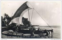 Ceylon (Sri Lanka) - Fishing Boats Drawn Up On The Shore Against The Palms - Sri Lanka (Ceylon)