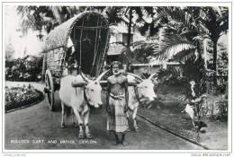 Ceylon (Sri Lanka) - Bullock Cart And Driver - Sri Lanka (Ceylon)