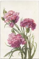 CPA - FLEURS - OEILLET ROSE - Illustration Signee - Edition Color - Flowers