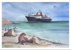CP Inédite - Carte Postale Navire Des TAAF - MARION DUFRESNE - Faune Australe - Commerce