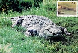 VENDA LWAMONDO   1992 4 PIECES COLLECTION MAXIMUN CARD (SET160012) - Sud Africa