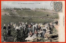"""CPA 21 (A. Vuillame Phot. BEAUNE) """"Les Vendanges En Bourgogne"""" ° L. V. édit Colorisée * Vigne Vin Wine Vendange - Beaune"""