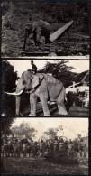 3 X PHOTOCARD MALAISIE MALAY ELEPHANT AT WORK CARRYING LUMBER & HUNT - Malaysia