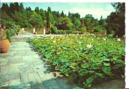 Verbania Pallanza (Piemonte) Lago Maggiore, Villa Taranto, Giardini Botanici, Fiori Di Loto - Verbania
