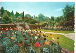 Verbania Pallanza (Piemonte) Lago Maggiore, Villa Taranto, Giardini Botanici, Fioritura Di Tulipani - Verbania