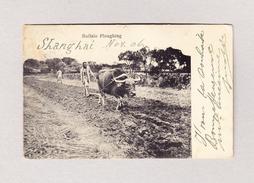AK CHINA Buffalo Ploughing SCHANGHAI 1906 Nach La Chaux De Fonds - Chine