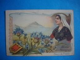 CHROMO  -  Fleurs De France  -  AUVERGNE  -  Bleuet Des Montagnes  -  10,5 X 7 Cms  - - Autres