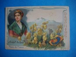 CHROMO  -  Fleurs De France  -  DAUPHINE    -  Aconit Anthora  -  10,5 X 7 Cms  - - Chromos