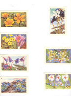 Série Sur Les  Fleurs     Images 85 Mm X 52 Mm éditées Par Entremets Franco-russe - Blumen