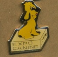 G# - PIN´S:  EXPO CANINE - Animaux