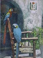 Cpa Photo OISEAUX  Perroquet , JOSEPH Et NAPOLEON , PERROQUETS   PARROTS Recto Verso Prix Fixe - Oiseaux