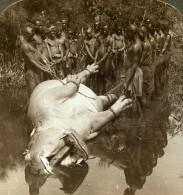 Afrique Equatoriale Victoria Nyanza Chasse à L'Hippopotame Ancienne Photo Stereoscope Underwood 1909 - Photos Stéréoscopiques