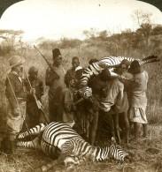 Afrique De L'Est Tanzanie Mont Meru Chasse Aux Zébres Ancienne Photo Stereoscope Underwood 1909 - Stereoscopic