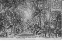 MAURICE  ALLEE DU TOMBEAU DE PAUL ET VIRGINIE APAMPLEMOUSSES      EDITEUR  MAGASINS REUNIS - Mauritius