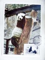 Card Maximum From Ussr 1964 Fdc Animal Fauna Panda Bear Moscow Russia Zoo - Cartes Maximum
