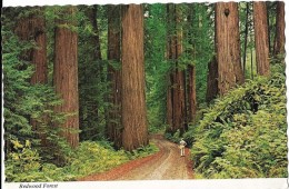 CALIFORNIA---the Redwood Highway---voir 2 Scans - Yosemite