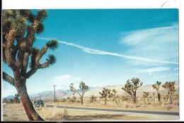 CALIFORNIA--- JOSHUA TREE FOREST--voir 2 Scans - Etats-Unis