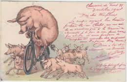 27703g  SANGLIER SUR VELO  - Bruxelles - 1901 - Illustrateurs & Photographes