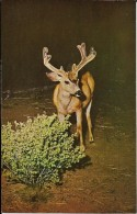 CALIFORNIA---YOSEMITE PARK--SURPRISE AT NIGHT---voir 2 Scans - Yosemite