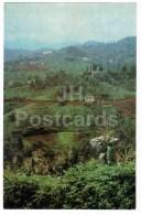 Tea Plantation - Views Of Georgia - 1971 - Georgia USSR - Unused - Géorgie