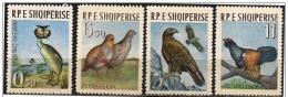 Albania/Albanie: Uccelli Diversi, Different Birds, Différents Oiseaux - Altri