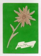 Cartolina RICAMATA - Saluti Da Fiera Di Primiero (Trento) - Stelle Alpine In Feltro - Viaggiata Nel 1966 - (FDC465) - Embroidered