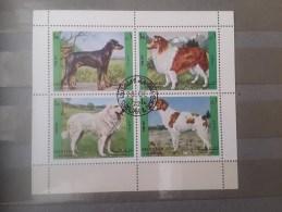 1972 Sharjah Dogs (73) - Cani