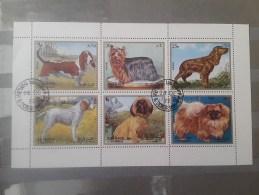 1972 Sharjah Dogs(73) - Cani
