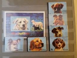 1974 Liberia Dogs (73) - Cani
