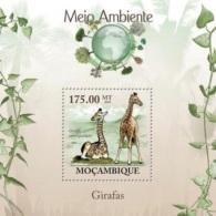 Mozambico 2010, Animals, Giraffes, BF